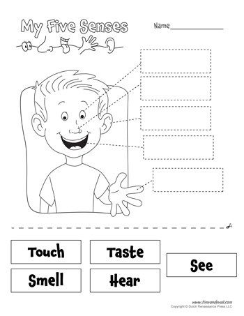 Five Senses Worksheet Tim S Printables Senses Preschool Five Senses Worksheet Five Senses Kindergarten
