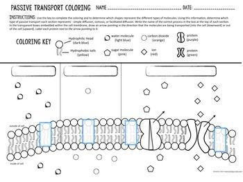 Cell Transport Passive Transport Coloring By Biology Roots Tpt Cell Transport Passive Transport Cell Membrane Coloring Worksheet
