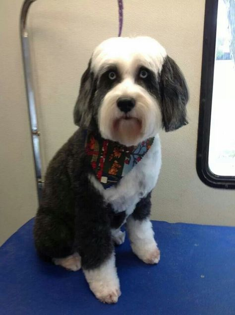Tibetan Terrier Diamond In The Ruff Mobile Pet Spa Edmond