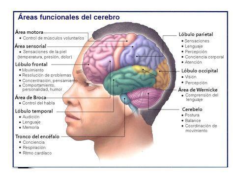 Dolor en el lóbulo frontal izquierdo