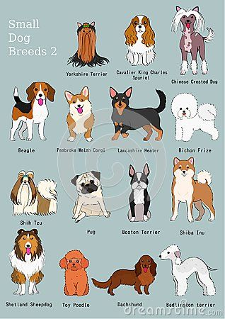 Group Of Small Dogs Breeds Hand Drawn Chart With Breeds Name