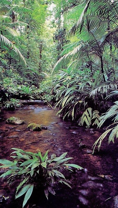 Facts And Information On The Amazon Rainforest Rainforest