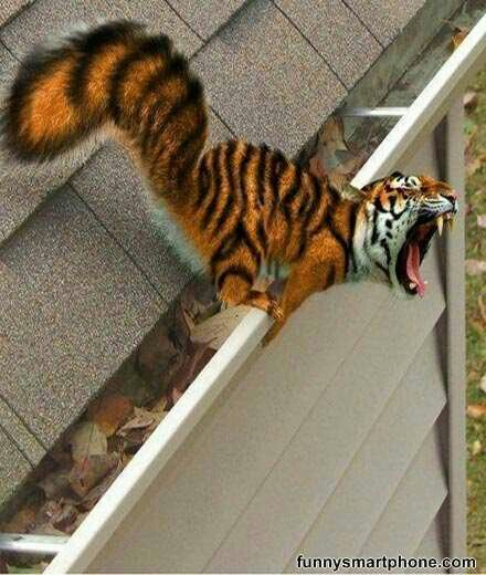 A Squiger (squirrel/tiger)