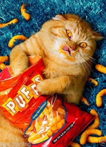 Pin On Cat Attitude Cattitude