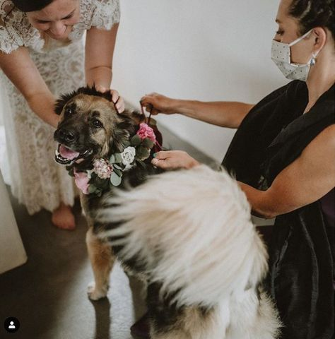 Look at this super sweet baby! We love seeing our clients incorporating their four-legged best friends into their big day.🐕 💞 #wedding #weddingplanning #weddingszn #Ido #weddinginspo #vowplanning #vowwriting #weddingdate#weddingseason #weddinghelp #weddingtips #weddingplan #weddinginspiration