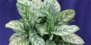 Pokojove Rostliny Katalog Pokojova Rostlina Rostliny Kvetiny