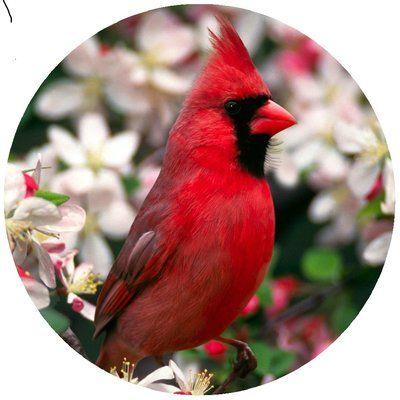 Andreas Silicone Trivets Custom Cardinal Jar Opener