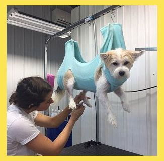Hammock Helper Grooming Hammock Grooming And Nail Trimming Made Easy Size Large Dog Groo In 2020 Dog Grooming Dog Grooming Shop Dog Washing Station