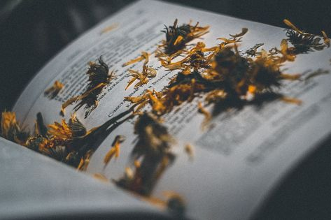 Free Image on Pixabay - Yellow, Word, Book, Flower, Home
