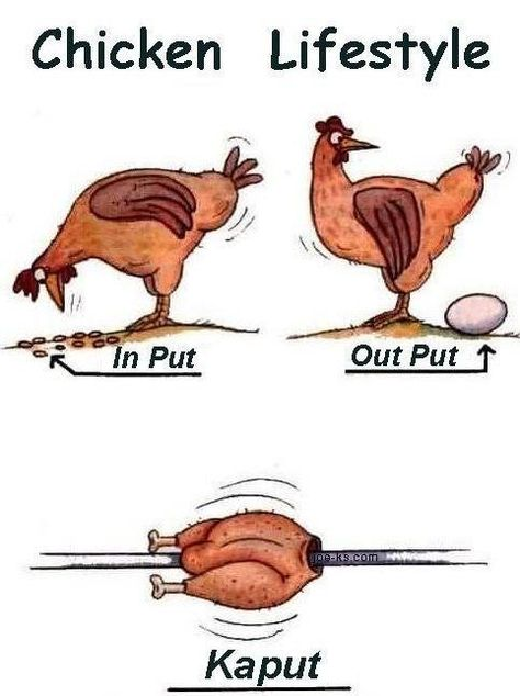 fowl jokes | BYC Forum's Unofficial Funny Pages!!
