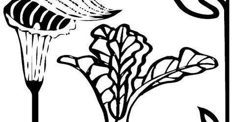 Paling Keren 28 Gambar Wortel Hitam Putih Untuk Diwarnai Ada Bermacam Macam Jenis Bunga Di Dunia Ini Namun Tidak Semua Gambar Gambar Kelinci Halaman Mewarnai