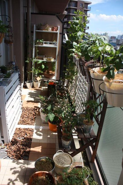 9月のベランダメモ ベランダ ベランダ菜園 おしゃれ ベランダガーデン