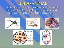 Pin De Jhonson Aguirre En Tejidos Animales Celulas