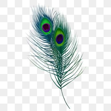 Green Peacock Feather Animal Peacock Feather Png Transparent Clipart Image And Psd File For Free Download Feather Background Feather Drawing Peacock Feather Drawing