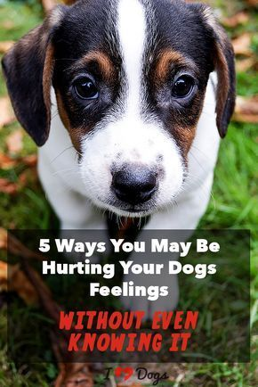 You Don T Mean To Be Mean Dog Training Books Dog Training Tips