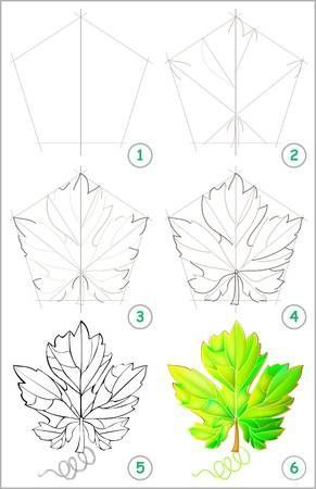 Illustration Of Page Shows How To Learn Step By Step To Draw A Grape Leaf Developing Children Skills For Drawing And Vine Drawing Flower Drawing Leaf Drawing