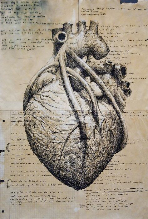 Would be cool to collage/sketch this anatomical heart