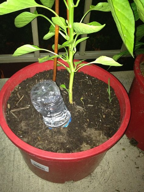 How to Make a Homemade Waterer