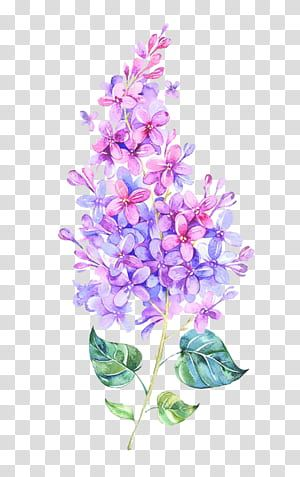Pink Flower Purple Color Watercolor Flowers Blue And Pink Lilac Flower Painting Transparent Bac In 2020 Pink Watercolor Flower Flower Illustration Watercolor Flowers