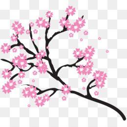Cherry Blossom Clip Art Cherry Blossom Free Download 800 800 0 76 Mb Cherry Blossom Clip Art Cherry Blossom Background Cherry Blossom Tree