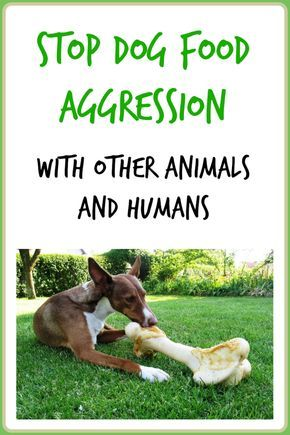 Dog Food Aggression With Other Animals And Humans Agressive Dog