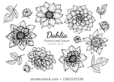Collection Set Of Dahlia Flower And Leaves Drawing Illustration For Pattern Logo Template Banner Posters Invitation And Greeting Card 2020 잎 그림 달리아 꽃 꽃 문신 디자인