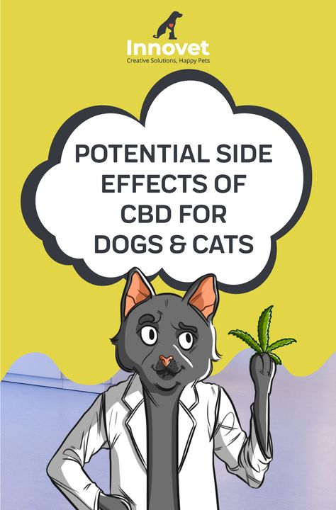 Why are Pet CBD Products Becoming Increasingly Popular?