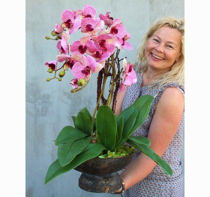 Pin Na Orchidee Storczyki