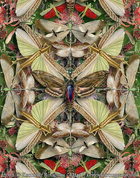 Forms of Nature Insects digital collage by Kenneth Rougeau The image in the new