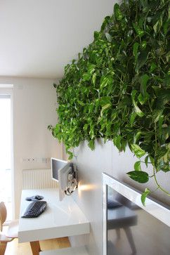 The living wall is made up of golden pothos plant.   The plants get light from the nearby window and grow in hydroponic inserts (pots filled with clay granules), relinquishing the need for soil. That means no dirt and no insects to deal with. Apart from occasional watering and directing their growth, the plants require little maintenance.