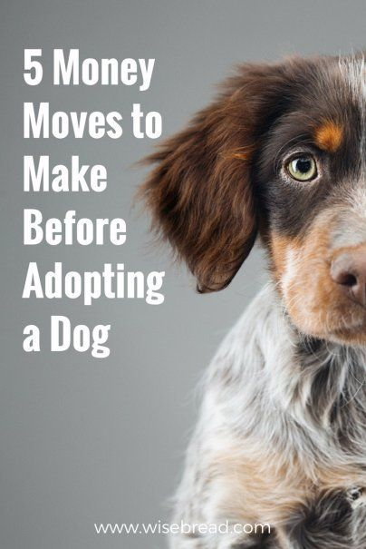 5 Money Moves To Make Before Adopting A Dog Dog Food Online