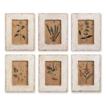Wild Flower Botanical 12 Piece Picture Frame Print Set On Paper Reviews Joss Main Framed Botanical Prints Framed Botanicals Botanical Prints