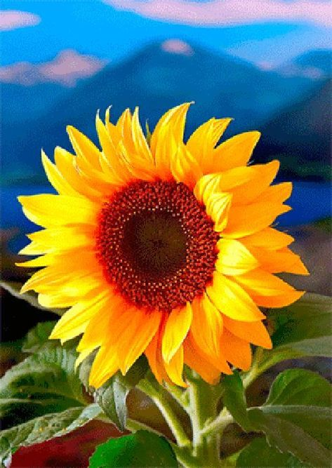 $3.95 - Sunflower - 3D Lenticular Postcard Greeting Card #ebay #Collectibles