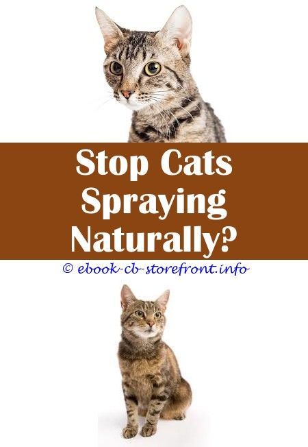 14 Classy Cat Spray Remover How To Get Admirable