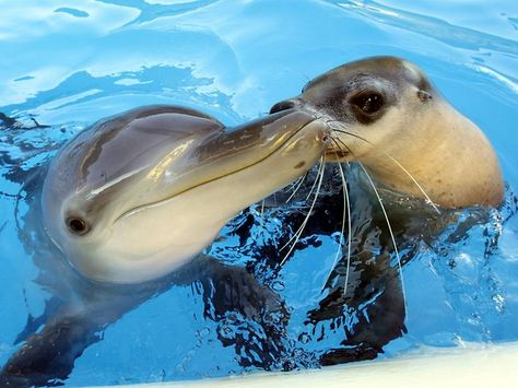 Jet the Dolphin and Miri the Seal - the best buddies!