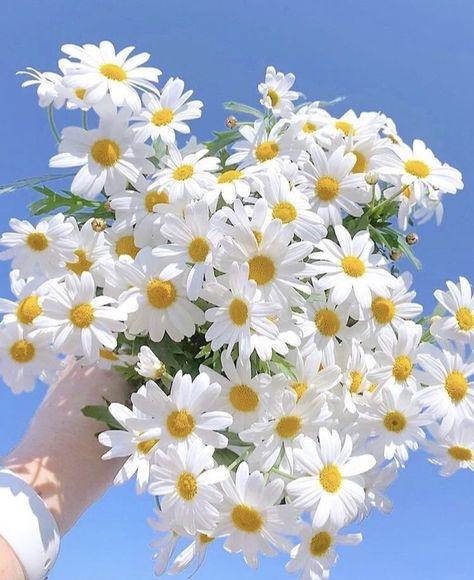 """flowers on Twitter: """"… """""""