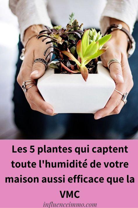 5 PLANTES QUI ABSORBENT L'HUMIDITE DE TOUTES LES PIECES
