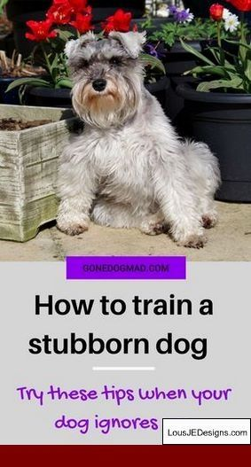 How To Train Your Dog To Come With Shock Collar And Pics Of How To