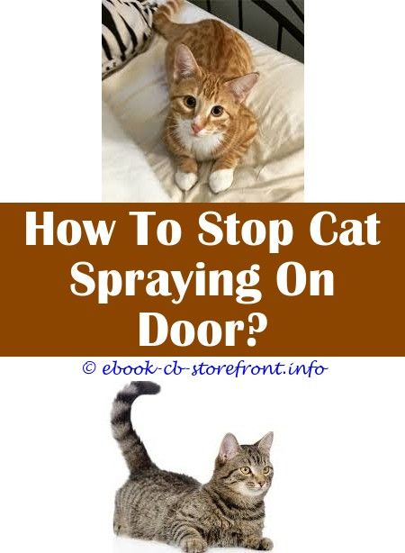 10 Inexpensive Stop Cats Spraying Outside House Admirable Toxoplasmosis