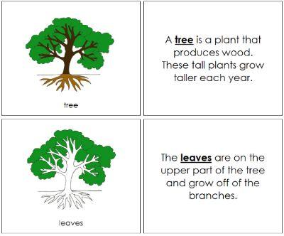 Tree Nomenclature Book Plant Lessons Montessori Toddler Activities Tree Study