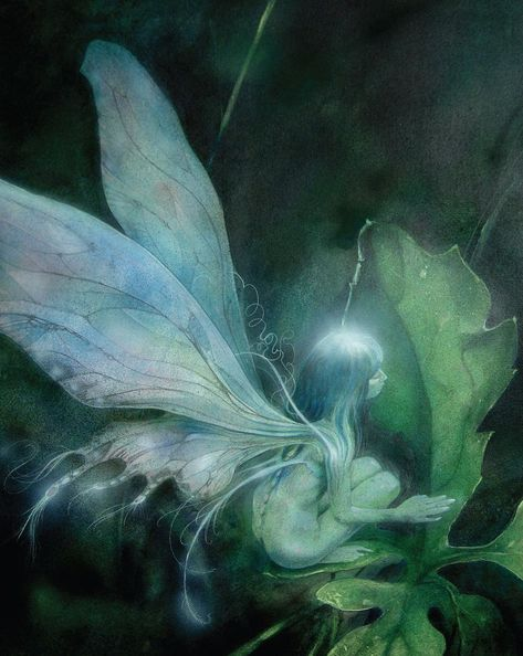 Winged Faerie by Brian Froud. the best fantasy artist ever! Brian Froud, Magical Creatures, Fantasy Creatures, Fairy Dust, Fairy Tales, Kobold, Vintage Fairies, The Dark Crystal, Love Fairy