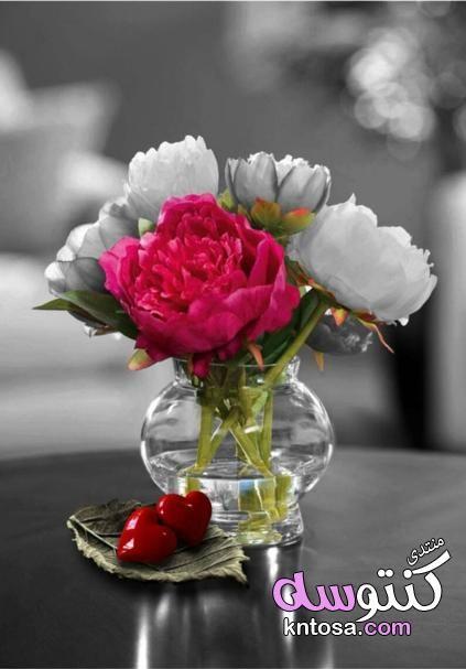 صور ورد2019 صور ورد رومانسيه ورود رومانسية للاهداء أجمل ورود الحب في العالم Kntosa Com 16 18 154 Guller Cicek Resimler