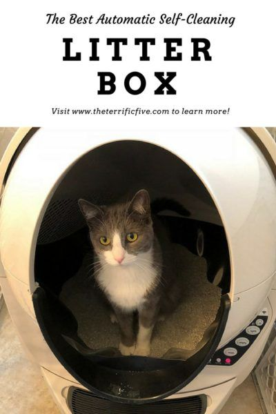 The Best Automatic Self Cleaning Litter Box Self Cleaning Litter Box Litter Box Litter