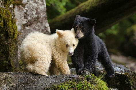 Results from a new study could have implications for brown bear evolution.