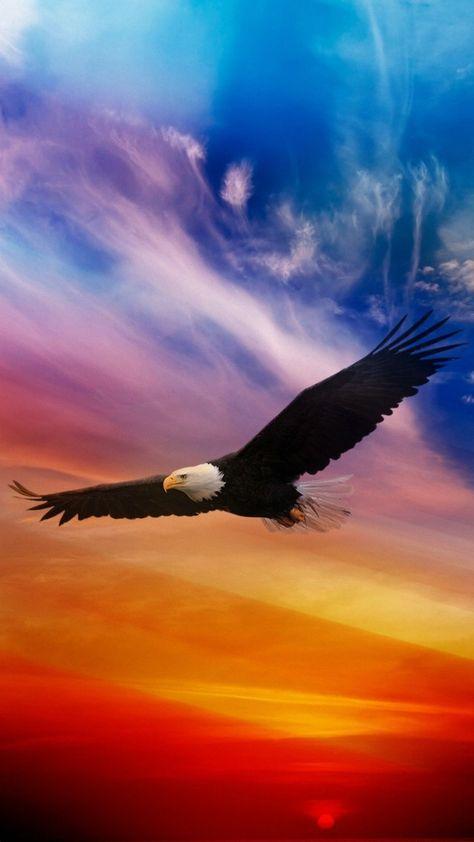 Eagle Wallpaper Iphone Hd Com Imagens Aguia Careca Fotos De