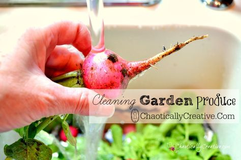 How to Clean Garden Produce   www.chaotiocallycreative.com
