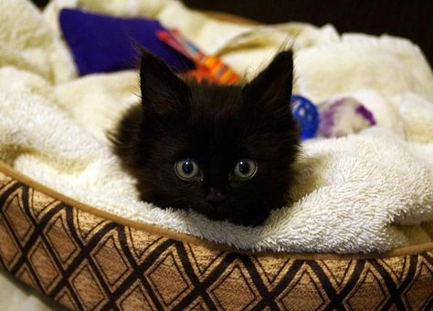 """""""Paralyzed Kitten Learns to Walk"""" (via @TheFluffPo). Lincoln is an amazing @Tenth Life Cat Rescue kitty. Watch his videos. Get inspired. :)"""