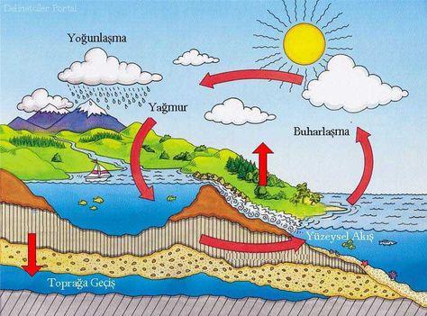 Ekosistem Ekolojisi Madde Donguleri Bikifi Cografya Biyoloji