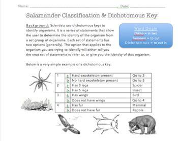 Salamander Classification Dichotomous Key Dichotomous Key Classification Salamander