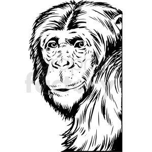 Black And White Realistic Chimpanzee Vector Clipart Vector Clipart Clip Art Animal Clipart